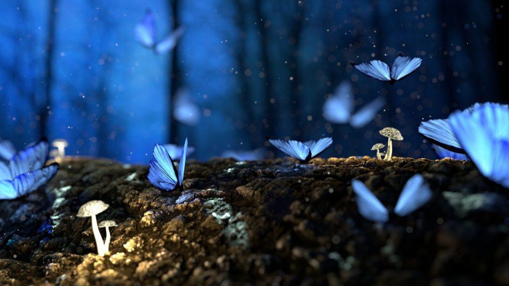 Düstere Wälder, zarte Elfen: In der Fantasy-Welt ist alles möglich.
